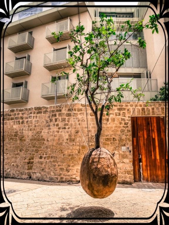 Tel Aviv - fruwające drzewo, fot.Piotr Michalski
