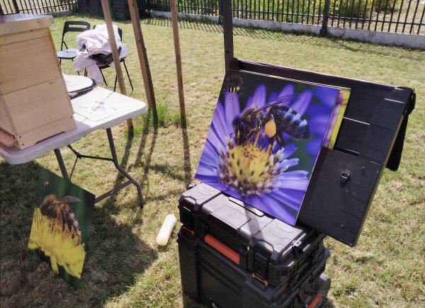 Zdjęcia makro pszczół