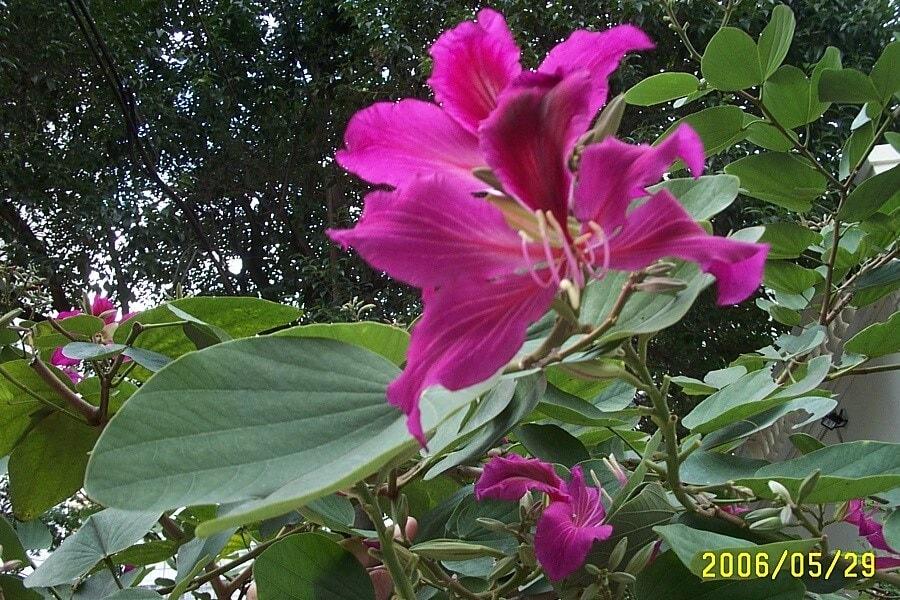 Kwiat wBrazylii, fot.Zbigniew T. Pągowski