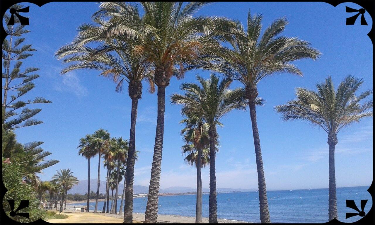 Plaża wEsteponie, palmy wnaturalnym środowisku, fot.Łukasz Siudak